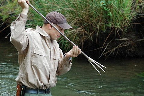 Fishing with a leister