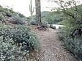 Butcher Jones Trail - Mt. Pinter Loop Trail, Saguaro Lake - panoramio (13).jpg
