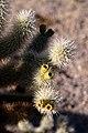 Cactus - panoramio.jpg