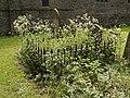 Cadney Churchyard - geograph.org.uk - 182330.jpg