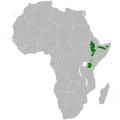 Calandrella somalica distribution map.png