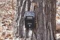 Camera on cottonwood tree (6659381551).jpg