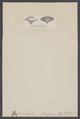 Camerospongia fungiformis - - Print - Iconographia Zoologica - Special Collections University of Amsterdam - UBAINV0274 007 04 0012.tif
