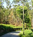 Caminho rural - Sandim-Gaia.JPG