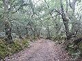 Camino Primitivo, Ferreiral, Bacurín 02.jpg