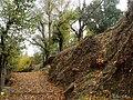 Camino lleno de hojas - panoramio.jpg