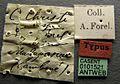 Camponotus christi casent0101521 label 1.jpg