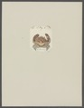 Cancer electra - - Print - Iconographia Zoologica - Special Collections University of Amsterdam - UBAINV0274 094 14 0042.tif