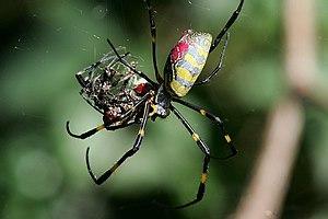 black widow spider sex sex iran teen
