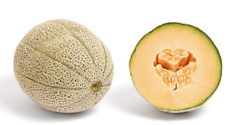 Shades of orange - A cantaloupe from Australia