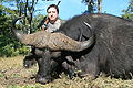 Cape Buffalo 41 inch Trophy.jpg