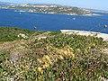 Capo d'orso- dal vecchio fortino, panorama sulla Maddalena - panoramio.jpg