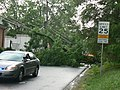 Car and fallen tree, by Max Frear (10 June 2008).jpg