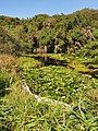Carfury Quarry vegetation.jpg