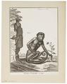 Cebus capucinus - 1751-1780 - Print - Iconographia Zoologica - Special Collections University of Amsterdam - UBA01 IZ20200164.tif