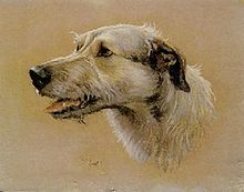 Irish Wolfhound painting