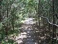 Cedar Key FL Shell Mound Park trail07.jpg