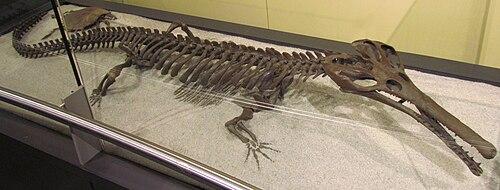 Champsosaurus