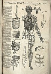 anatomy wikipedia