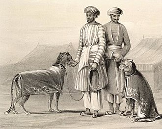 Sketch of cheetahs belonging to the Nawab of Oudh with attendants (1844) Cheetahs nawab oudh1844.jpg