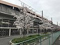 Cherry blossoms and Chikuhi Line in front of Kyudai-Gakkentoshi Station 2.jpg
