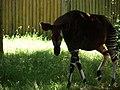 Chester Zoo (22062647786).jpg