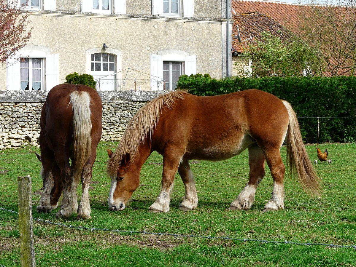 cheval de trait leger 3 lettres