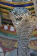 Chiang mai stone snake.jpg