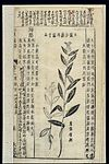 Chinese Materia medica, C17; Plant drugs, Thistles Wellcome L0039342.jpg