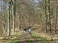Chisbury Wood - geograph.org.uk - 738015.jpg