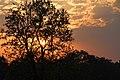 Chitwan-16-Baum-Sonnenuntergang-2013-gje.jpg