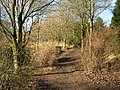 Christmas Day in the woods near Shaw - geograph.org.uk - 95197.jpg