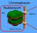 Chromatosom.png