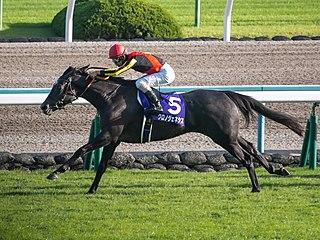 Chrono Genesis Japanese Thoroughbred racehorse