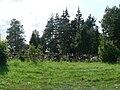 Cmentarz Komunalny w Waplewie.jpg