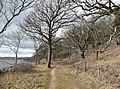 Coastal footpath, Arnside Park, Arnside - geograph.org.uk - 736105.jpg