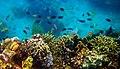 Colorful underwater world, Mabini Batangas - panoramio (10).jpg