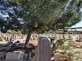 Concordia cemetery section 3.jpg