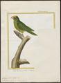 Conurus st. thomae - 1700-1880 - Print - Iconographia Zoologica - Special Collections University of Amsterdam - UBA01 IZ18500205.tif