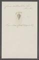 Conus articulatus - - Print - Iconographia Zoologica - Special Collections University of Amsterdam - UBAINV0274 086 07 0037.tif