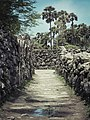 Coral Walls.jpg