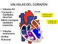 Corazón - Válvulas - 001.jpg