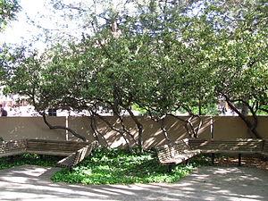 University of New Mexico Arboretum