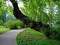 Cotroceni Palace Garden - Bucharest 10.jpg