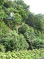 Crags, Blebo - geograph.org.uk - 1441456.jpg