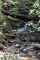 Creekat hm 2 (5737862466).jpg