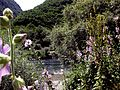 Crni Drim River 80.JPG