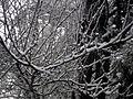 Curico, la nevada del 2007 (10029460924).jpg