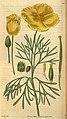 Curtis's botanical magazine (Plate 3061) (8410386379).jpg