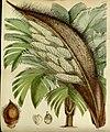 Curtis's botanical magazine (Tab. 4773) (8599417579).jpg